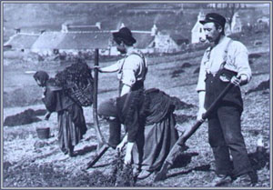 Farmers drying Kelp for burning on Sky in the 1880s